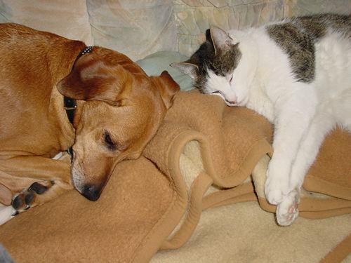 wenn sich hund und katze gut verstehen. Black Bedroom Furniture Sets. Home Design Ideas